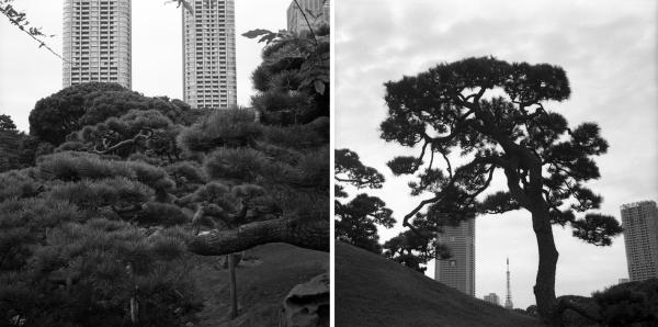 Journal Japonais.... Parc Hama-rikyu-teien. Tokyo
