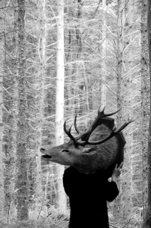 Création Peau de Bête en forêt d'Arcques la Bataille...1