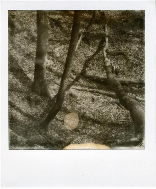 Forêt d'Arques 6
