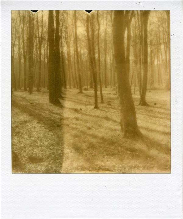 Forêt d'Arques 4