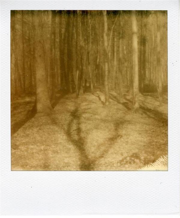 Forêt d'Arques 2
