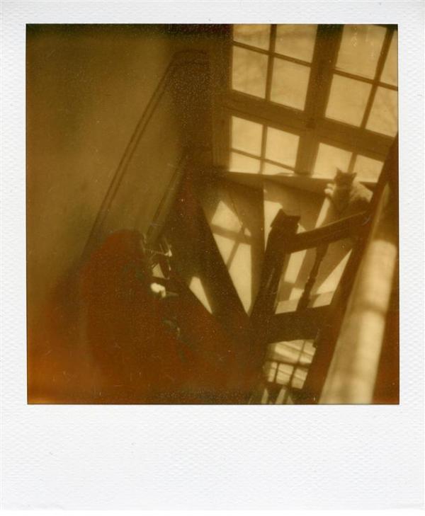 Nathalie tapie dans l'escalier pour photographier le chat...