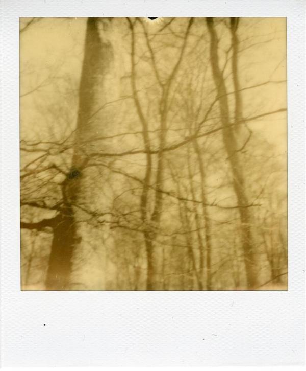 Forêt d'Arques 1