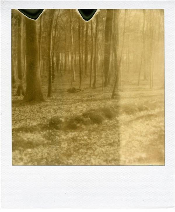 Forêt d'Arques 3